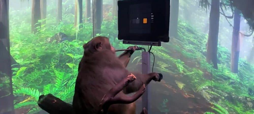 Macaco Pager jogando videogame. Imagem: Reprodução Youtube
