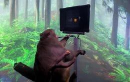 """Macaco com implante cerebral joga videogame por """"telepatia"""""""