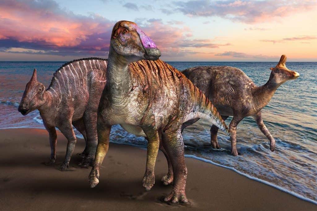 Três dinossauros de bico de pato