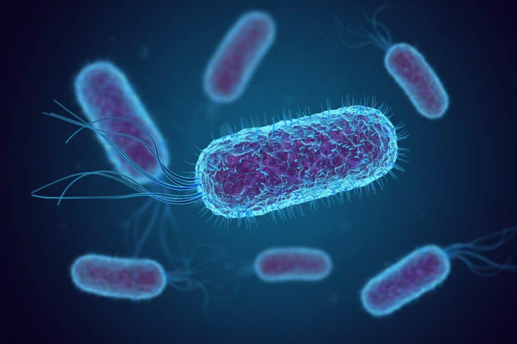 Imagem de bactérias E. Coli, que podem ser nocivas aos humanos. Imagem: fusebulb / Shutterstock