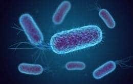 Pesquisadores do Ceará demonstram nova forma de combate à bactérias
