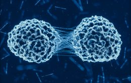 Após quimioterapia, células cancerosas que sobrevivem ficam estressadas