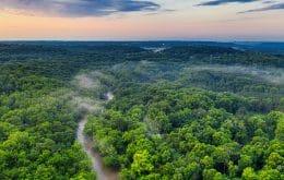 Genética ecológica: estudios de la empresa que alteran el ADN de los árboles para combatir el efecto invernadero