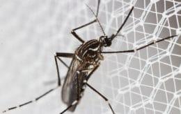 Mosquitos geneticamente modificados são aposta de cientistas africanos contra a malária