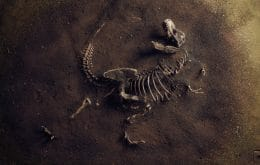 New prehistoric monster: fossil discovered in Argentina may reveal new species of dinosaur