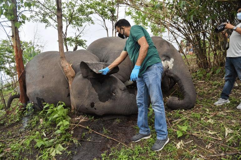 Imagem mostra um veterinário examinando o corpo de um dos elefantes supostamente mortos por um raio na Índia