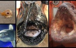 Quais são as criaturas marinhas mais estranhas?