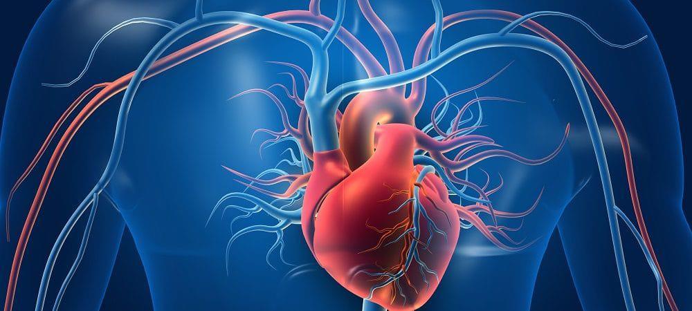 Corazón. Imagen: Shutterstock