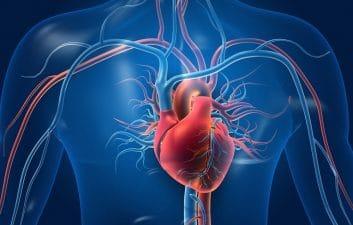 Las personas con un corazón más sano tienen un mejor rendimiento cognitivo, según un estudio