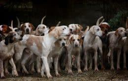 Encontrado novo tipo de coronavírus que pode passar de cachorros para humanos