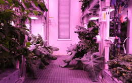 Antarctic greenhouse harvest promising for lunar agriculture