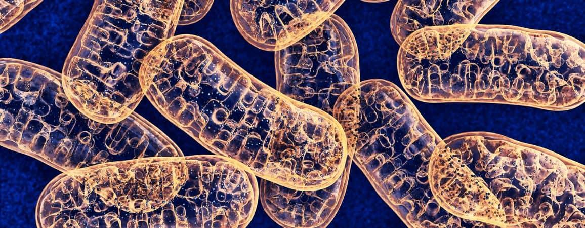 Vida de micróbios. imagem: iStock