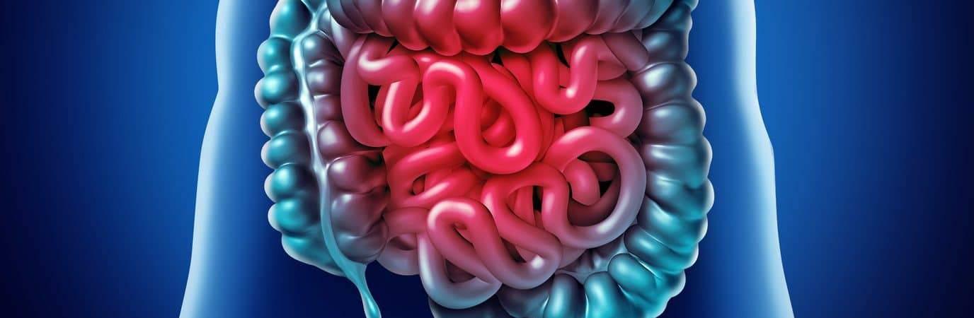 intestino-1376x450