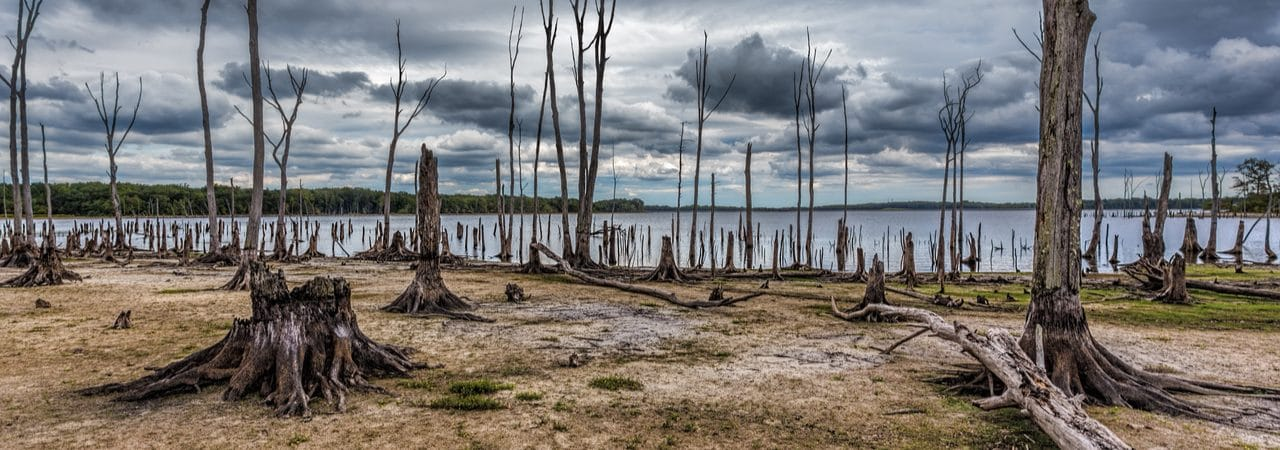 Image shows a region with dead trees and the sea in the background