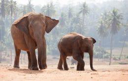 18 elefantes mortos na Índia teriam sido atingidos por um raio