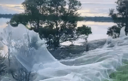 Imagens de teias gigantes tomam conta das redes sociais da Austrália