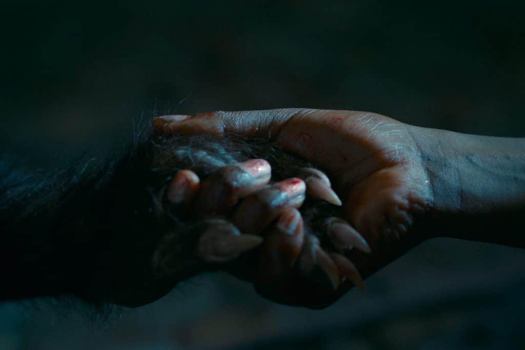 Una mano humana sostiene una pequeña mano de hombre lobo.