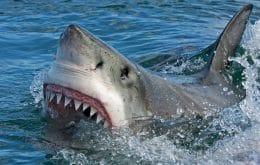 Los huesos de 3.000 años muestran la víctima de tiburón más antigua jamás descubierta