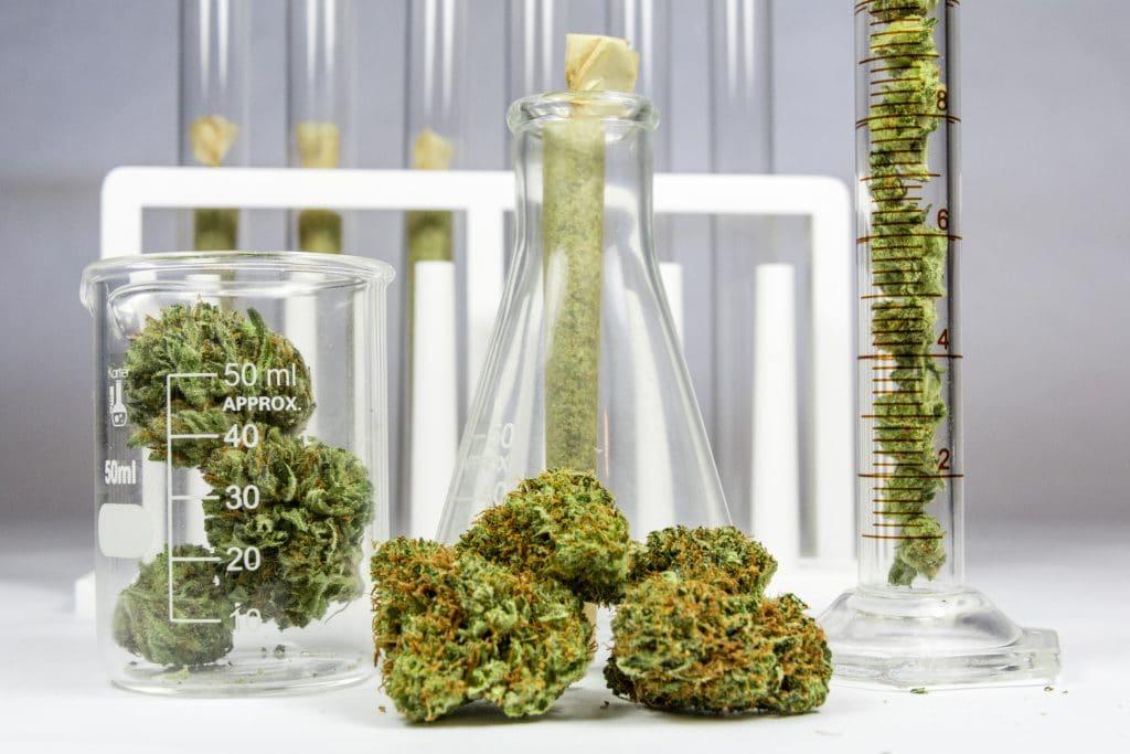 Mini cápsulas de cannabis podem ajudar a tratar doenças neurológicas. imagem: Shutterstock