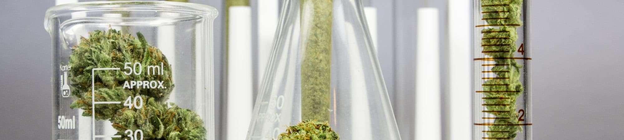 Cannabis-2000x450