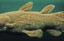 Un pez gigante 'fósil viviente' puede vivir 100 años en el fondo del océano