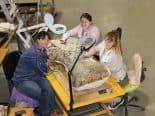 """Descoberta confirmada: """"Australotitan cooperensis"""" é maior dinossauro da Austrália"""
