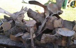 Fim do mistério: Esqueleto gigante que desapareceu de praia em SP foi encontrado