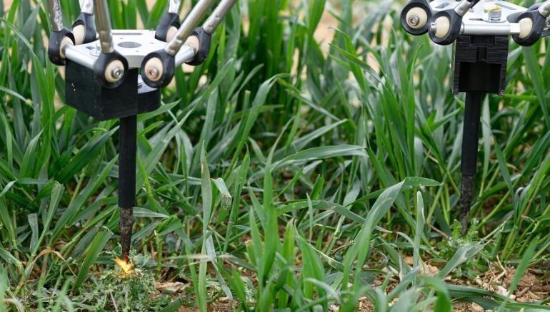 Los robots eliminan las malas hierbas con electricidad. Imagen: Small Robot Company