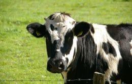 China prohíbe las importaciones de carne vacuna británica debido a la enfermedad de las vacas locas