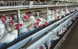 China confirma primeiro caso de nova cepa da gripe aviária em humanos