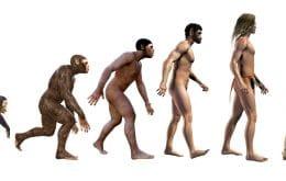 Elo perdido? Cientistas encontram fóssil que indica existência de nova espécie humana