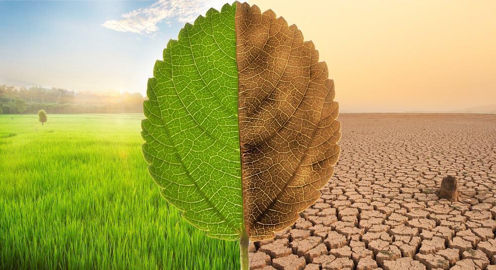 Gigantes em tecnologia pedem à SEC que exija relatórios sobre impacto ambiental das empresas. imagem: Shutterstock