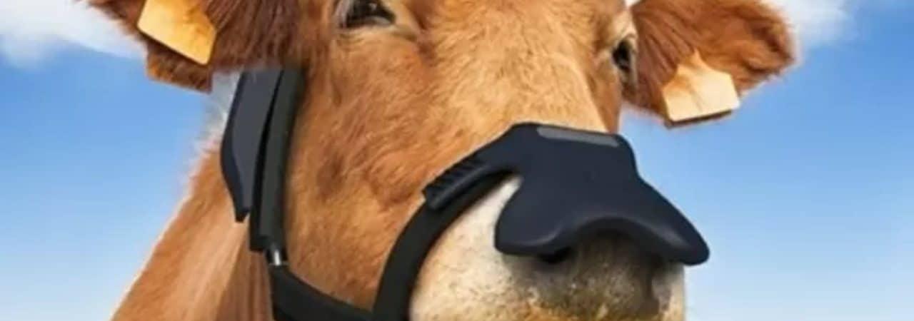 Imagem mostra uma vaca vestindo a máscara bovina desenvolvida pela Zelp