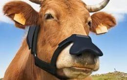 Máscara para vacas converte metano em água e gás carbônico para reduzir o aquecimento global