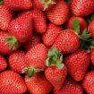 Pesquisadores criam embalagem que pode manter morangos frescos por até 12 dias