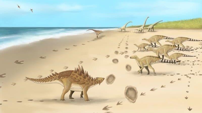 pegadas-de-dinossauros-800x450