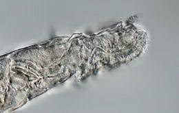 Los científicos reaniman criaturas congeladas hace 24 años