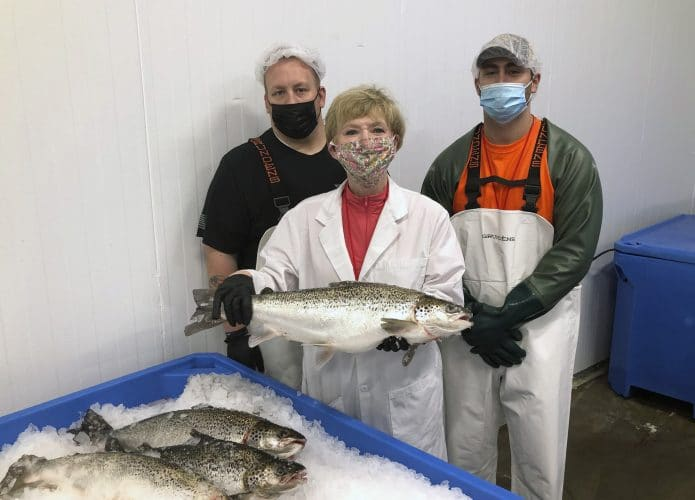 salmão geneticamente modificado eua