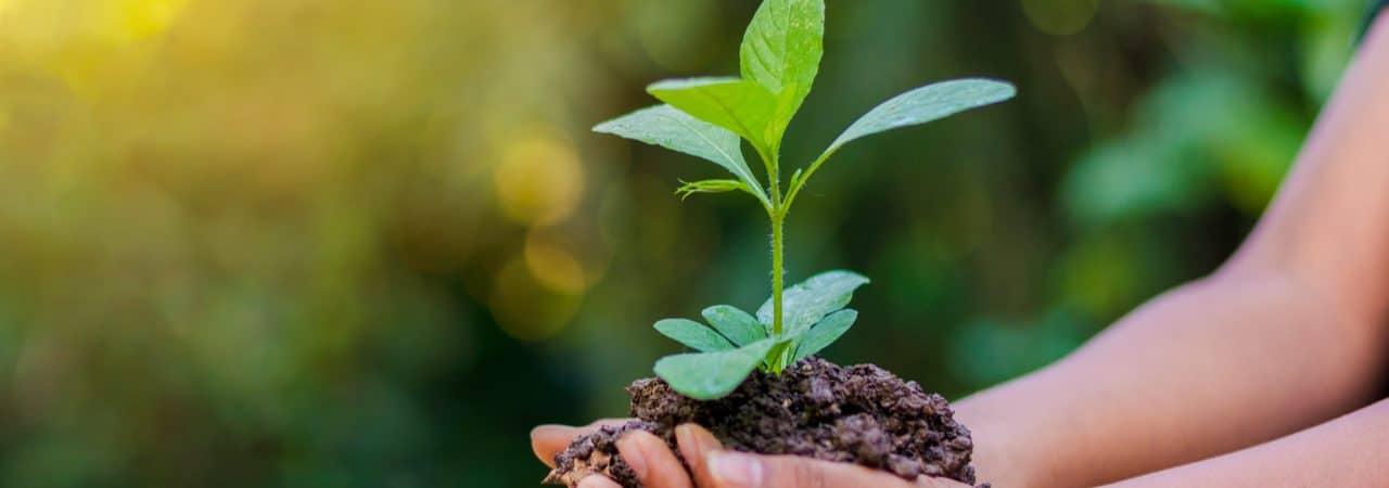 Imagem mostra duas mãos juntas, segunrando um punhado de terra como uma planta crescendo por cima