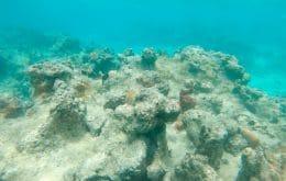 Zonas mortas: regiões oceânicas com oxigênio reduzido existem há mais de 1,2 milhão de anos