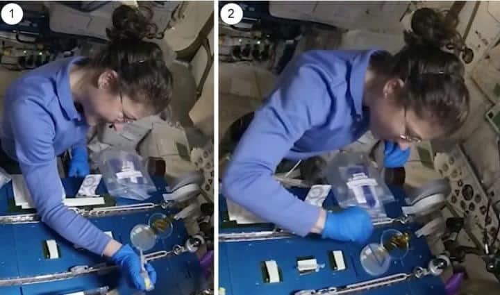 A astronauta da NASA Christina Kock realizando o procedimento experimental a bordo da Estação Espacial Internacional