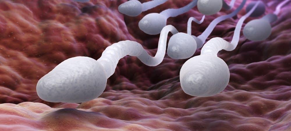 Ilustração em 3D de espermatozoides