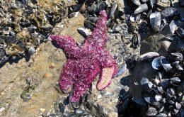 Heat wave killed over 1 billion sea creatures