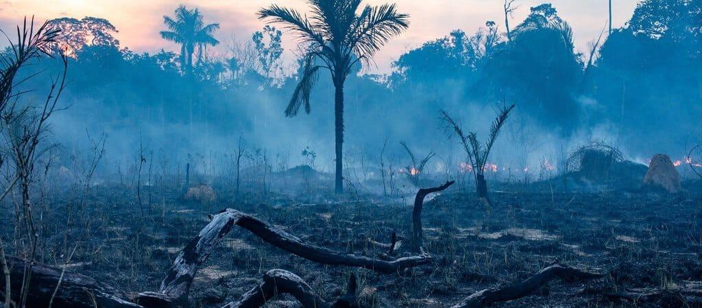Resquícios de fogo na Floresta Amazônica