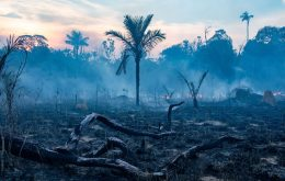 Amazon forest already emits more carbon than it absorbs