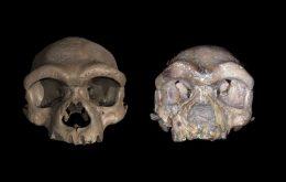 """Crânio do """"Homem Dragão"""" é realmente de uma nova espécie de hominídeo?"""