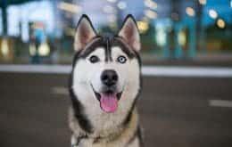 Pets mais saudáveis: app permite o acompanhamento e controle da diabete em animais de estimação