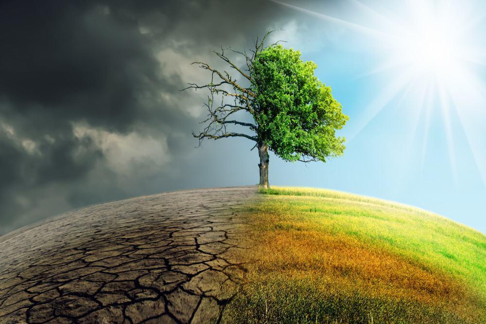 Ilustração de mudança climática com árvore meio seca e meio verde
