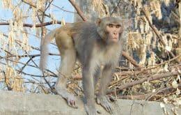 Vírus raro de macaco causa morte de veterinário na China