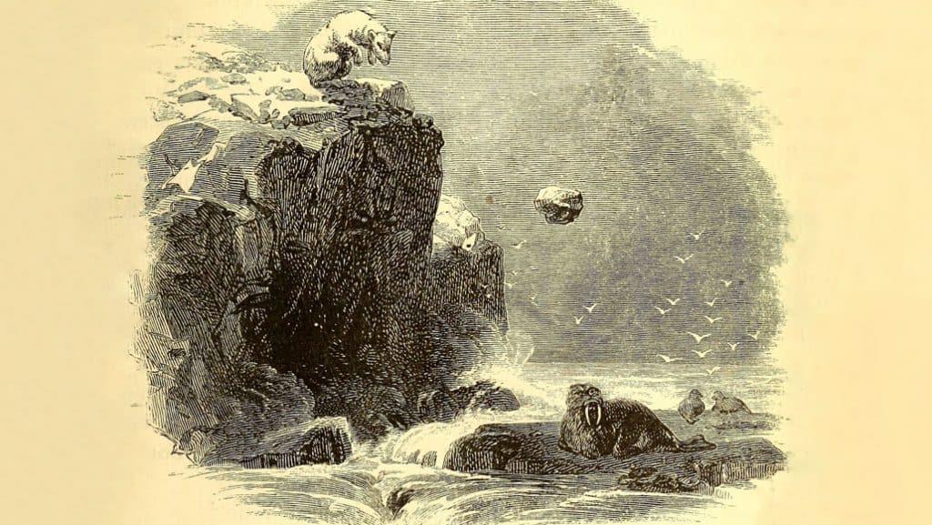 Ilustração de um urso polar arremessando uma pedra na direção de uma morsa
